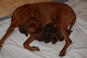 Gaias puppies are born