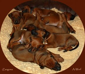 The iZangoma A-Litter turns 2 years today