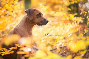 Autumn shooting with Lichtphotographie